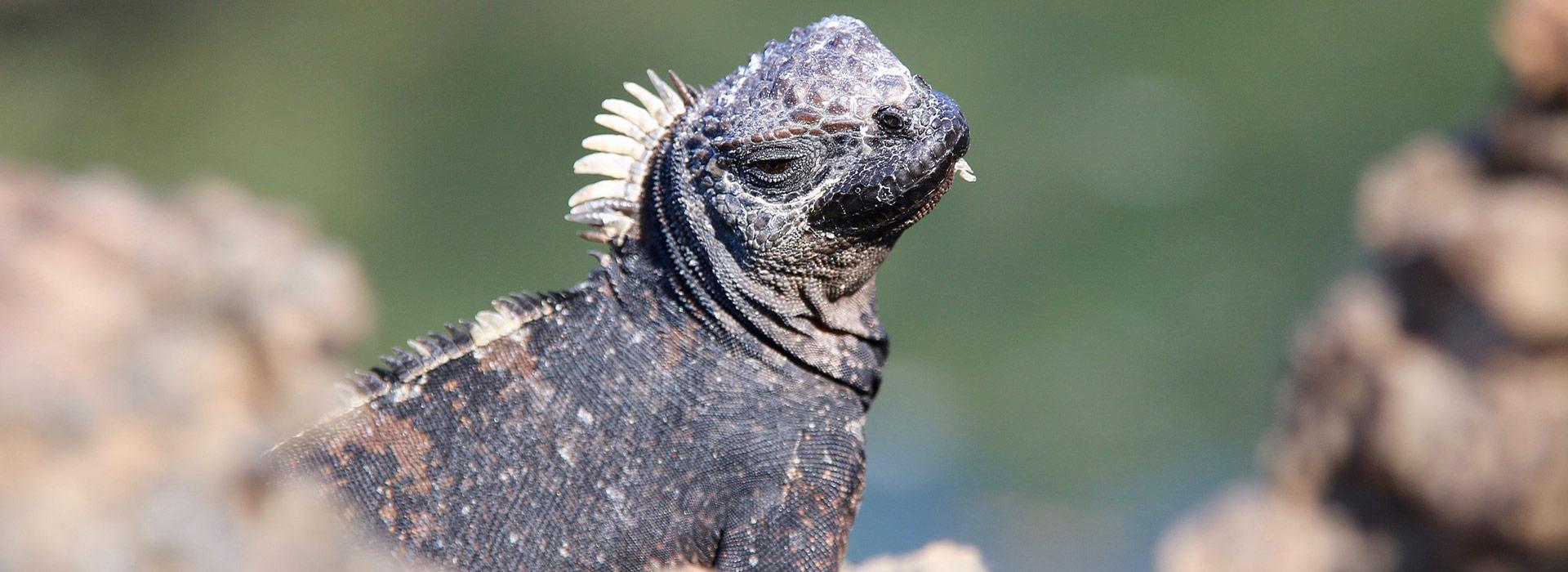 Galapagos Impression